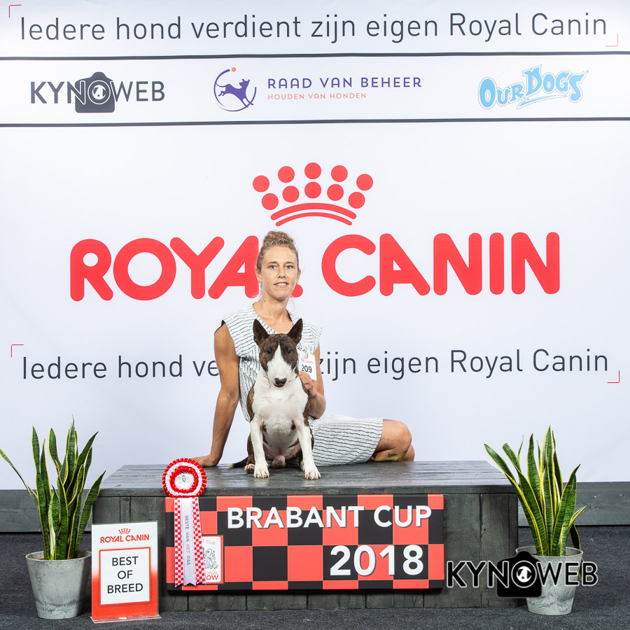 best_of_breed_209_lr_brabantcup_2018_kynoweb_ky3_4069_20180804_09_54_44